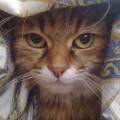 Se il gatto non ti capisce ti teme