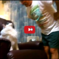 Gatto non vuole cedere la sua poltrona