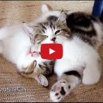 Piccoli gattini giocano e poi fanno le nanne