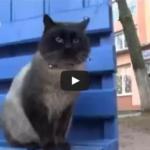 Questo splendido gatto tutti i giorni con qualsiasi tempo aspetta qualcuno