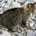 I gatti prevedono i disastri, soffrono al posto nostro e fanno la spia. Lo rivela un libro