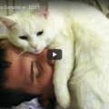 Cat Alarm Clocks Compilation
