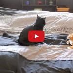 Rifare il letto con i gatti una vera e propria impresa, ma da vivere con il sorriso sulle labbra