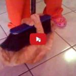 Gatto e le pulizie di casa