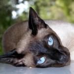I gatti possono essere gelosi ?