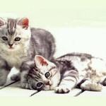 Lettera aperta di un inguaribile gattaro