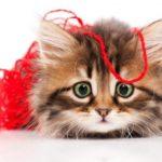 Dieci pericoli domestici per i gatti