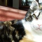 Scarlett, la gatta che sfidò il fuoco per salvare i suoi gattini