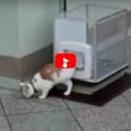 Ha inventato un'ascensore per il suo vecchio gatto anziano.