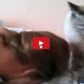 Gatto sveglia in modalità energica.