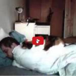 Dormire con un gatto