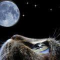 Poesia Ode al gatto  di Pablo Neruda