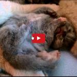 Gattini dormono e sognano [VIDEO]