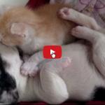 Gattino e cagnolino si coccolano
