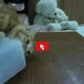 Gatto prende la mano dell'umana per farsi aprire il contenitore del cibo