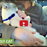 Gattina adottata si addormenta solo in uno strano modo