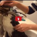 Gatto fa il bagnetto: Ma è vero che il bagno al gatto fa male ?