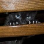 """L'aggressività nei gatti: quando l'umano diventa """"preda"""""""