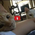 Quale prezioso privilegio essere svegliati da un gatto