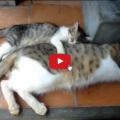 Piccolo gattino segue come un'ombra il fratello maggiore