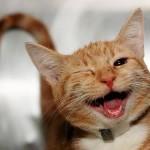 Il tuo gatto dimostra questi segnali di felicità?