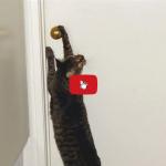 Il gatto è il capo indiscusso