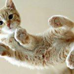 Educare il gatto: col decalogo del bon ton felino è più facile