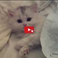Gattino aspetta la sua mamma per dormire