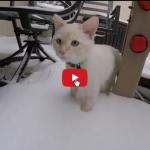 Gattino felice di giocare con la neve