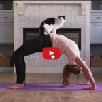 Gatto VS Cane