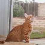 I terremoti non si possono prevedere, i gatti non sono d'accordo