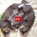 Mamma papà e gattini