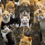 Cat Land, Il santuario dei gatti
