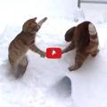 I gatti e la neve