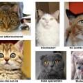 l linguaggio non verbale del gatto