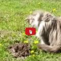 Che monello questo gatto