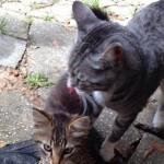 Il loro gatto ha bisogno di un fratellino e  porta un piccolo amico a casa