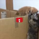 Con mamma gatta sei al sicuro