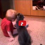 Gatto e bambino amici per la vita