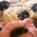 Una vita da gattari