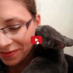 Gatti e bisogno di affetto