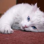 Sforzatevi di capire i gatti e così capirete anche le donne