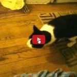 Umano finge di litigare con il cane il gatto accorre in aiuto del cane