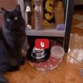 Gatto insiste vuole i crocchini