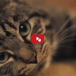 Gatto: Come prendersi cura di un umano