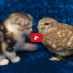 Un gattino e un gufo