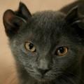 Yoda, il gatto con 4 orecchie che nessuno voleva