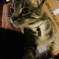 Ruby, una dolce gattina tigrata che proprio non sopporta l'idea di essere lasciata da sola
