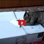 Un gatto raggiunge sempre il suo obiettivo