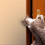Gatti: Se sono dentro vogliono uscire se sono fuori vogliono entrare